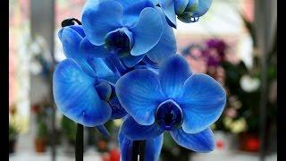 """Семена из Китая - """"Орхидея"""""""