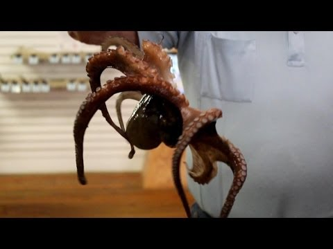 Very Cool Octopus crawing on the ground - By The Lighthouse Lady