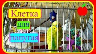 Клетка для попугая//Уход за волнистым попугаем//Советы новичку