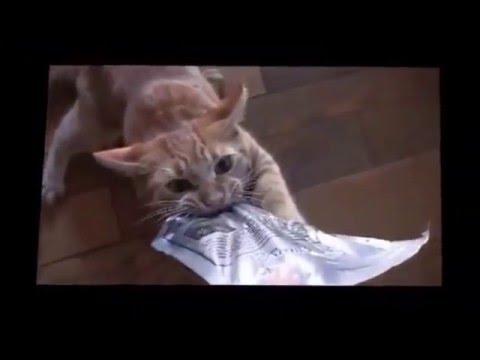 Видео про котов 6
