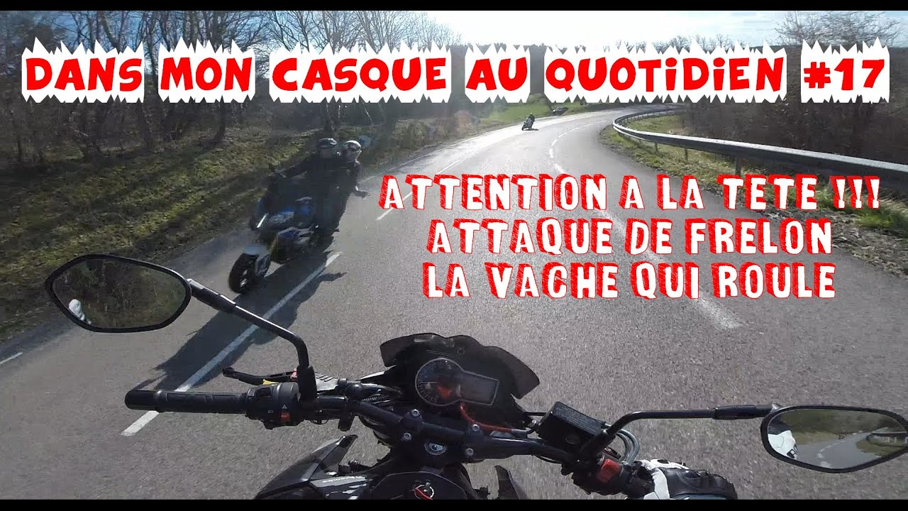 ATTENTION A LA TETE  ATTAQUE DE FRELON LA VACHE QUI ROULE