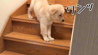 階段下りを成功させました! 日々成長を続けるベンツ。 3回目のワクチ...