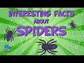Interesting facts about Spiders | Educational Video for Kids.