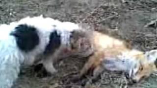 собака трахает лиса