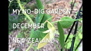 December No-dig Garden Tour // No Dig Garden // NZ Garden // Deep Mulching // No Till Garden