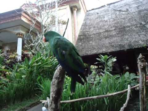 beautiful bird at Blanco Museum, Ubud Bali