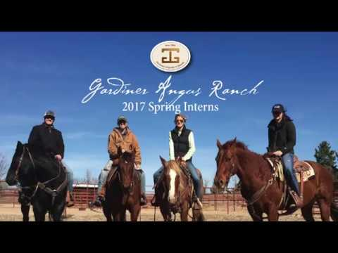 A Look Back with the Gardiner Angus Ranch 2017 Spring Interns