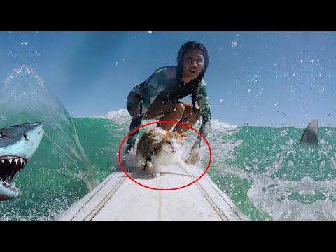 Одноглазый кот обожает серфинг за 22 января