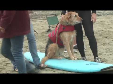 US surfing dogs - 09/2016