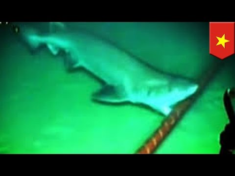 Shark attacks on Internet cables may be to blame for bad connection in Vietnam