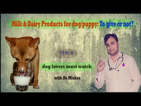 Why milk is not good for dog?