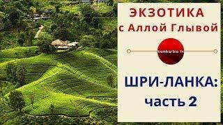 ЭКЗОТИКА КАК ОНА ЕСТЬ Шри Ланка курорты и сезон отдыха Советы туристам