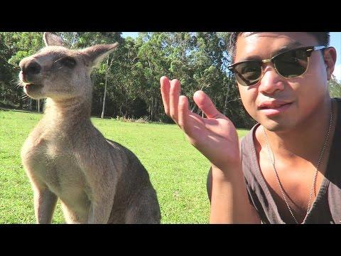 AUSTRALIA TRAVEL VLOG DAY TWO. KANGAROOS, KOALAS, AND A CAT? OH MY.