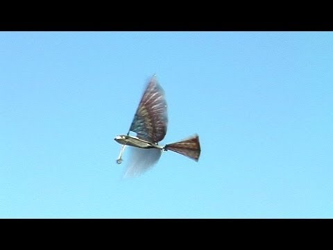 Radio Controlled And Gliding Over >> RC Ornithopter like a Cybird #2 羽ばたき機2号機 | Doovi