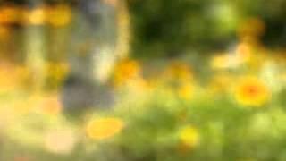 petit rayon de soleil au jardin fleuri
