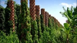 Starling Farm - Spice Trip Cambodia - Black Pepper