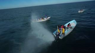 SEA SHEPHERD SHIP ATTACKED INSIDE VAQUITA REFUGE