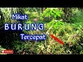 Mikat Burung Tercepat  Mp3 - Mp4 Download