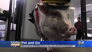 Trending Now: Airports Making Animals Available To Cheer Up Passengers