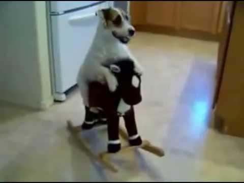 Cachorro mais inteligente do mundo