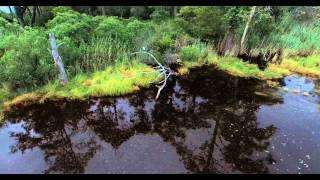 Hays Beach and Deep Creek wildlife
