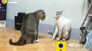 Funny  song of cat