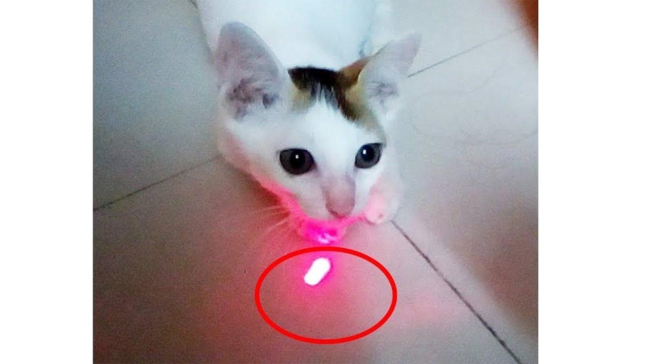 Funny Cat Video   Cat VS Laser Light