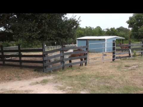 Caspian Horses at MCC Farms - July 2013