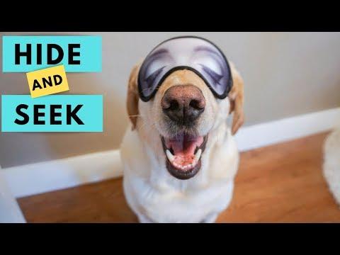 Dogs play Hide and Seek