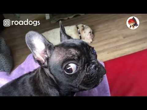 Rescue A Super Cute Snotty Puppy | Sad Rescue Story