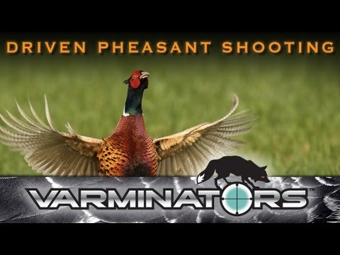 Driven Pheasant Shooting in Derbyshire