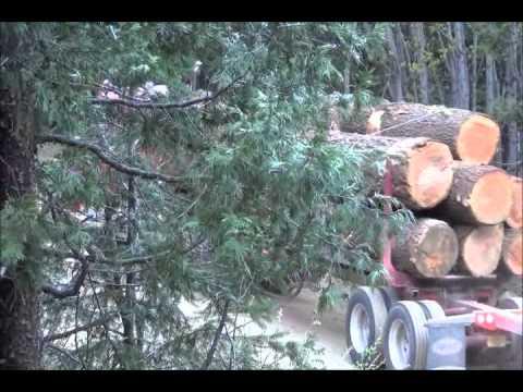 Granite Hill Log Trucks   4-2013