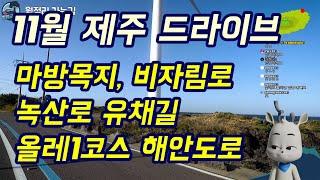 [제주마실] 알비와 루루TV / 11월 제주 드라이브