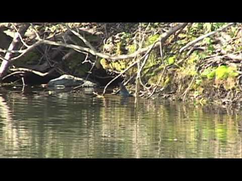 Trinity River: Early Fall Fly Fishing 2009