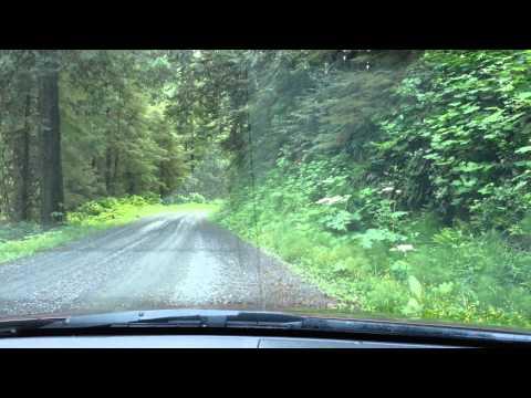 A ride through Oregon forest