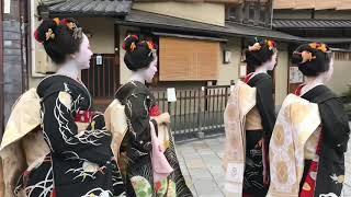 【八朔】挨拶回りをする舞妓(Maiko)さんたち 2019