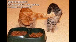 Фото Кошки 2020 приколы с котами смешные котики. Смешные коты .