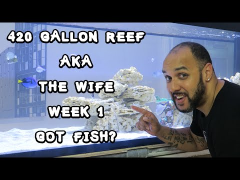 420 Gallon Reef aka The Wife Week 1: Got Fish?