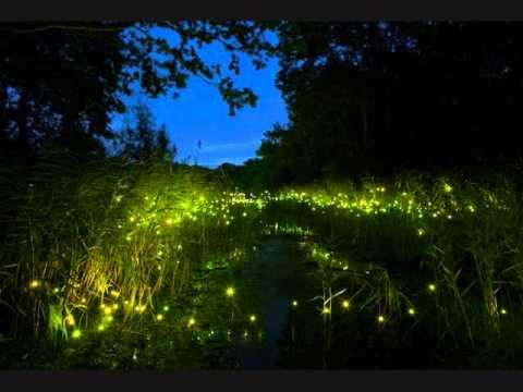 American Yard Fireflies In The Sky