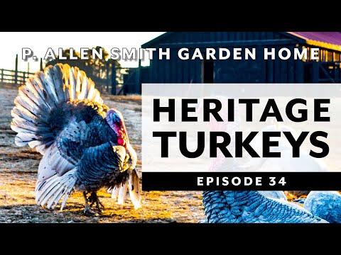 Heritage Turkey Varieties: Moss Mountain Farm | P. Allen Smith (2019)