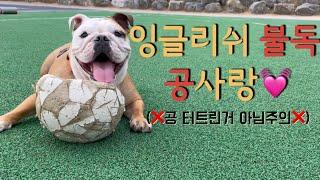 집에서 답답한강아지 놀아주기(축구공가지고놀기/강아지다이…
