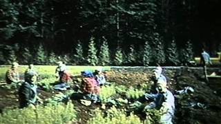 Forest Renewal: The Silviculture Program