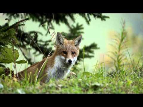 "(HD 1080p) ""Morning Mood""  (Peer Gynt),  Edward Grieg"