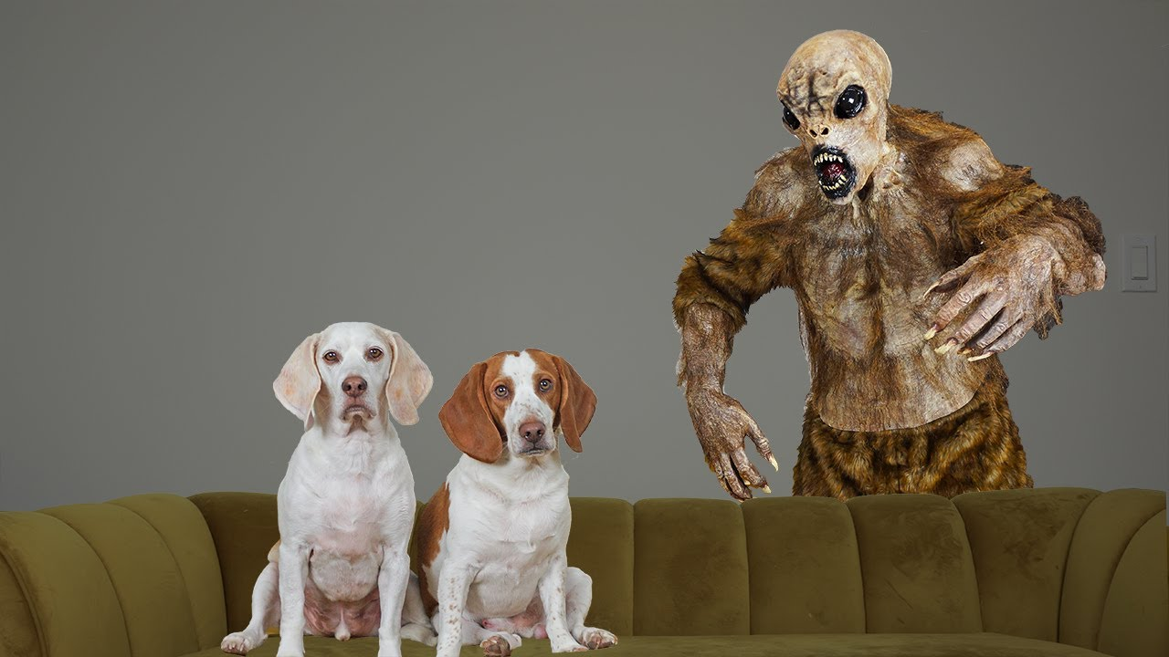 Dogs vs Chupacabra Prank: Funny Dogs Maymo & Potpie Battle Chupacabra Monster for Halloween
