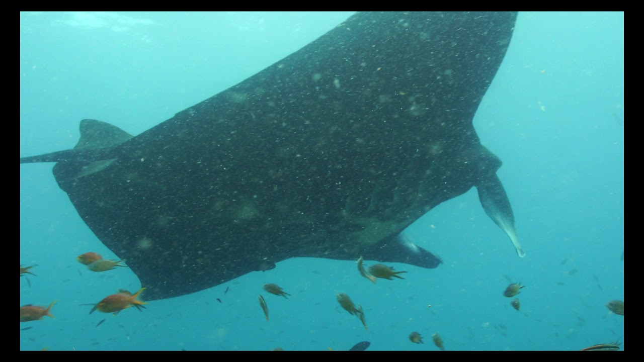 Raja Ampat Video - Aquarius Scuba