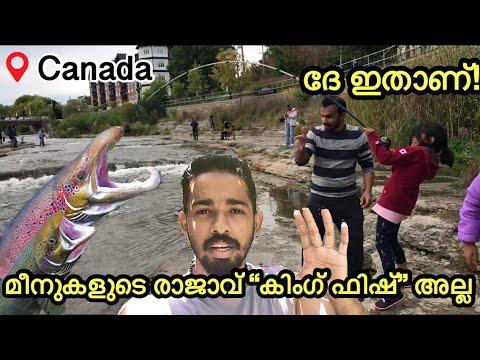 സാൽമൺ പിടിക്കാൻ കാനഡാക്ക് പോയാലോ? | Salmon Fishing Fishing From Canada 🇨🇦 | Kerala Fishing