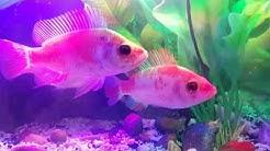 Menatap ikan di aquarium