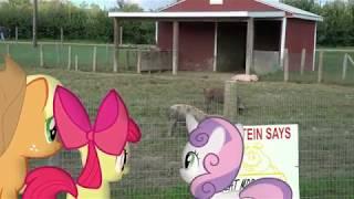 MLP: IRL - Apples Meets Pigs