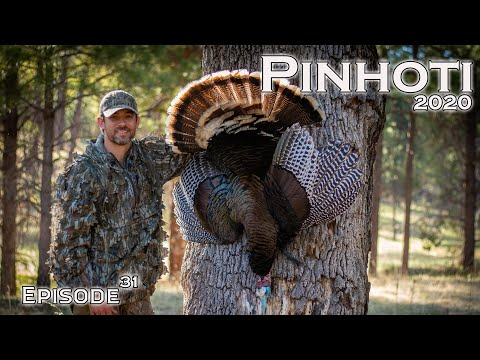 MOUNTAIN MERRIAM'S TURKEY HUNTING | NATIONAL FOREST GOBBLERS | PUBLIC LAND- Pinhoti 2020