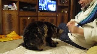 Обучение кота, часть вторая.